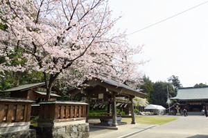 桜が咲いてました!難しい案件の進行中は、最高の気分転換になります!